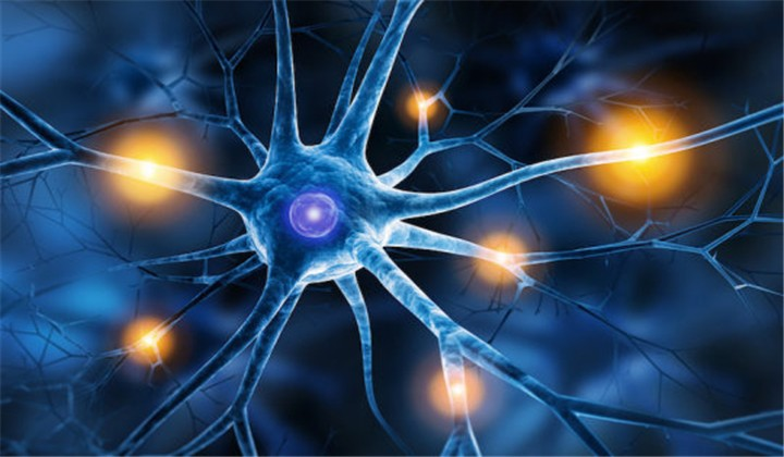 Scientists regenerate neurons in mice with spinal cord injury and optic nerve damage
