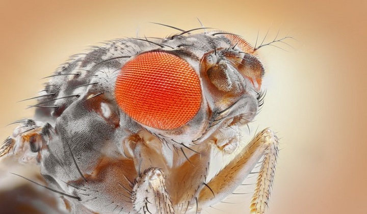 Optical Illusions Explained in A Fly's Eyes